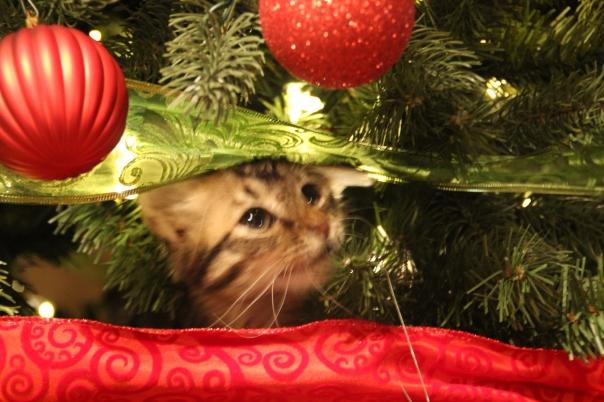 Tipsy loves the Christmas Tree